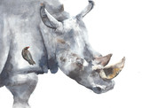 Rhinoceros safari african animal watercolor painting illustration isolated on white background
