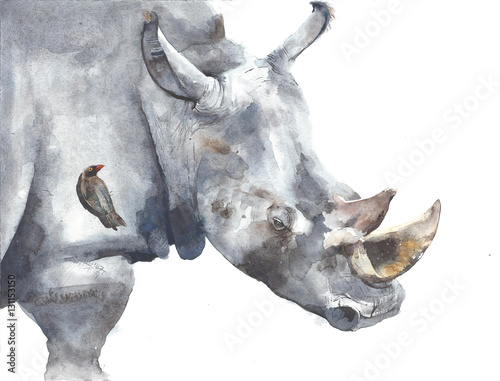 Rhinoceros safari african animal watercolor painting illustration isolated on white background - 131153150