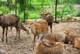 spotted deer in the enclosure