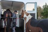 rentrer les chevaux dans le van - 131184138