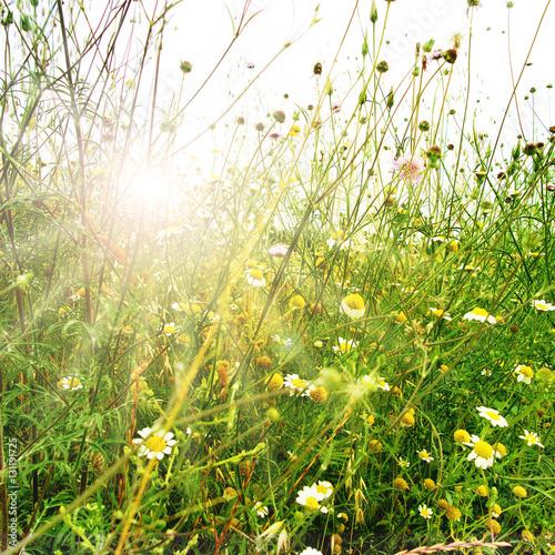 Fototapeta Meadow landscape in spring