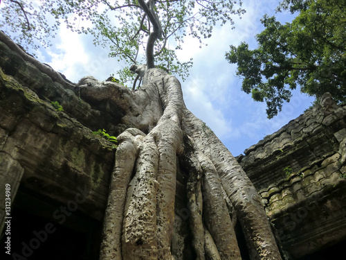 Ta Prohm tree root covered ancient abandoned lost temple in Siem Reap, Cambodia Poster