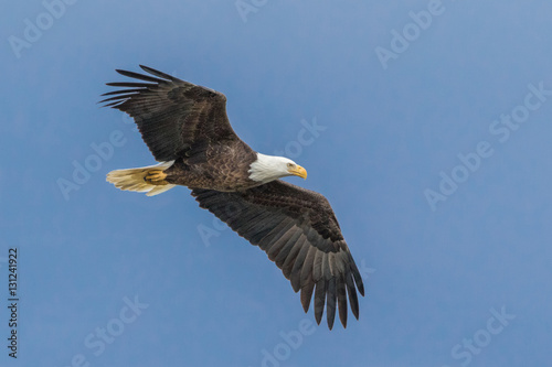 Canvas Eagle Soaring Eagle 2