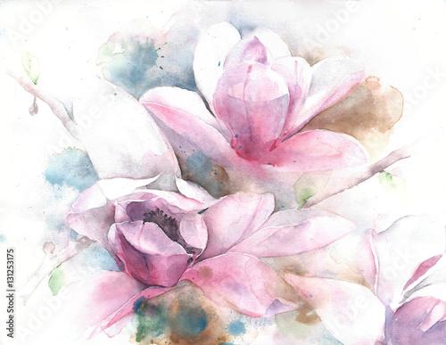 Magnolia flower tree tulip magnolia watercolor painting illustration greeting card - 131253175