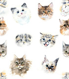 Fototapety Seamless pattern with cats and roses. Watercolor hand drawn illustration