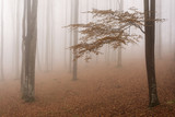 lot of trees forms a forest and foggy