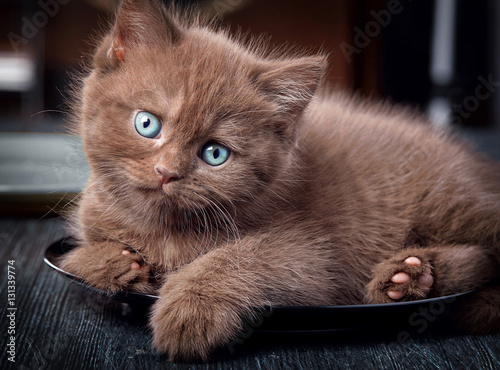 Poster Brown kitten on black plate