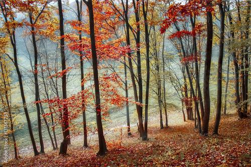 Obraz Foggy autumn moment