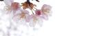 桜のバナー素材 春 - 131370510