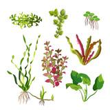 Aquarium plants set. Cartoon underwater algae. Seaweed natural elements.