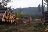 Ścięte drzewo ułożone na kupę przy drodze w lesie