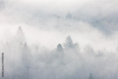 Papiers peints Blanc Forêt Vosgienne dans la brume