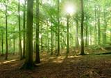 Sonnenstrahlen im naturnahen Buchenwald, Stubnitz, Nationalpark Jasmund, Insel Rügen, Mecklenburg-Vorpommern, Deutschland - 131416588