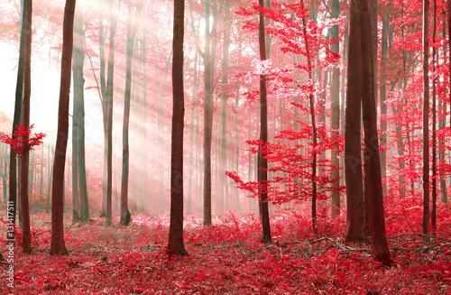 Fototapeta magic forest