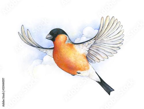 Watercolor bullfinch. bird in flight handwork drawing. Christmas symbol. Beautiful winter bird with grey and pinkish plumage soaring in clouds. - 131444197