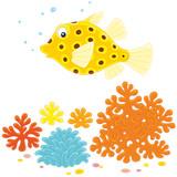 Yellow boxfish on a reef