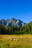High Tatra mountains in lesser Poland at summer