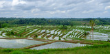 Paddy fields in Jatiluwih 1