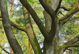 Baumkrone Stamm Hintergrund