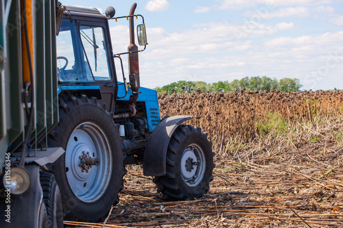 Poster Big blue tractor with a trailer loaded with sunflower seeds close-up on the field