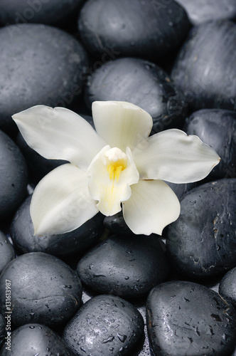 Plexiglas Spa White orchid blossom with black on wet background