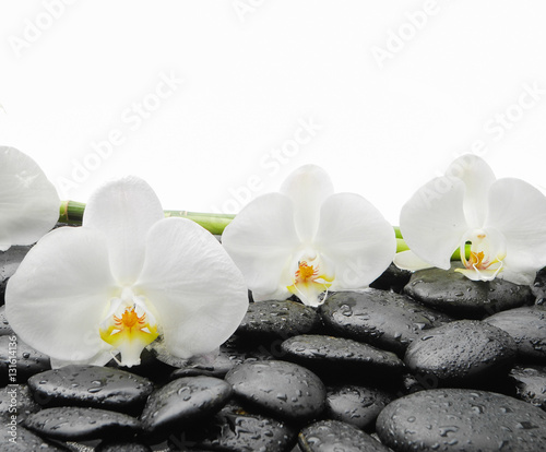 Fotobehang Spa White orchid blossom with wet black stones background