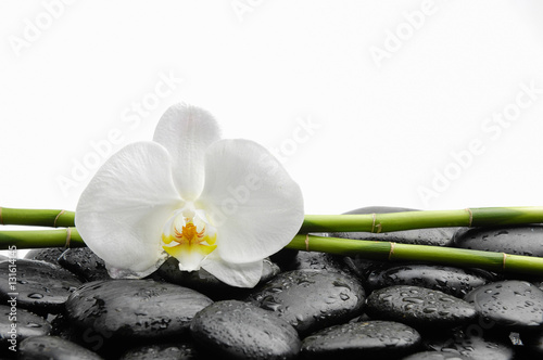 Poster Spa White orchid with black stones ,grove on wet background