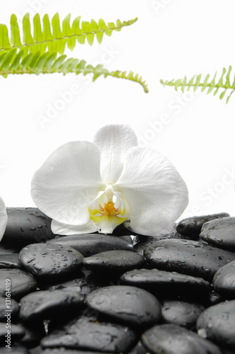 Poster Spa White Orchid and fern with therapy stones