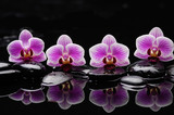 still life with black stones and gorgeous orchid