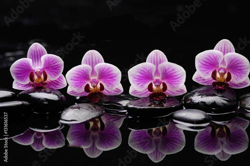 Zdjęcia na płótnie, fototapety na wymiar, obrazy na ścianę : still life with black stones and gorgeous orchid