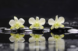 Still life with three white orchid with black stones  - 131618334