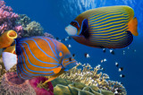 Colorful coral reef with many fishes - 131629515