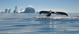 Beautiful view of icebergs and whale in Antarctica - 131649522