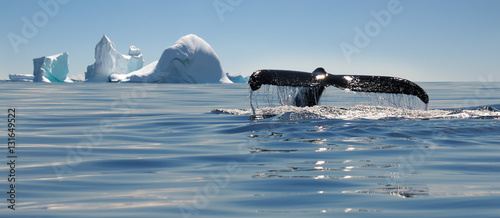 Fotobehang Antarctica Beautiful view of icebergs and whale in Antarctica