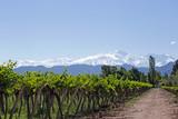 Andes & Vineyard, Mendoza, Argentina