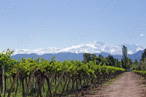 Deurstickers Wijngaard Andes & Vineyard, Mendoza, Argentina