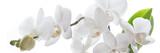 Weiße Orchidee isoliert