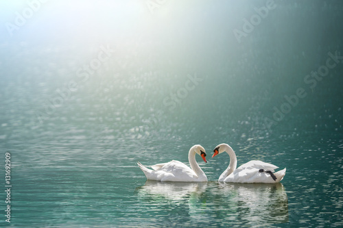 beautiful white swan in heart shape on lake in flare light .Love bird and Valentine's day concept