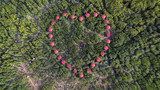 people use pink umbrella to make the heart in yellow flower Crotalaria field