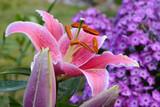 Blumen 662