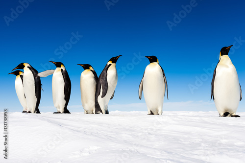 Fotobehang Antarctica Group of cute Emperor penguins on ice