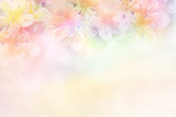 Fototapety beautiful flower soft background in pastel tone for valentine or wedding