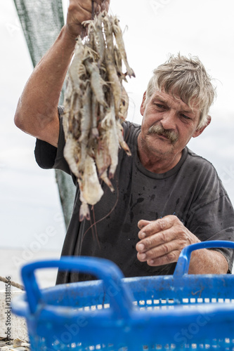 Poster Sorting shrimp on fishing boat