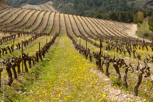 Poster vineyard in winter valley with flowers