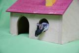 Mysz w domku