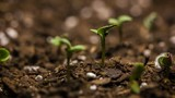 Seed Macro Time Lapse Growing - New Life - 131848770