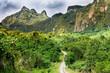 Quadro Forest on Fiji - Viti Levu - Oceania