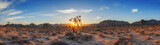 Panorama of a sunrise in Joshua Tree National Park