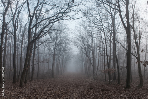Forest in mysterious fog