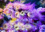 underwater image of colorful tropical plants in London  aquarium